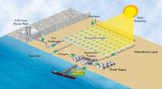 Asi funciona el proceso de Algenol. Más que prometedor y con 9000 galones por acre, que son mas de 84.000 litros por hectarea. Lleno, por favor