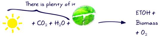 Asi producen combustible las algas